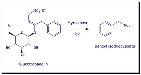 [Glucotropaeolin, Benzyl Isothiocyanate]